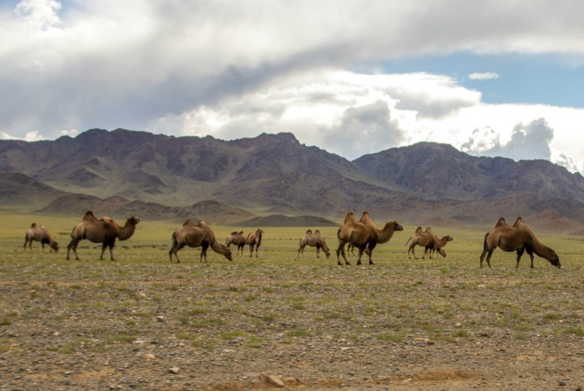 Traveling to Mongolia? 5 Things You Need to Know - The Nerdventurists - www.nerdventurists.com